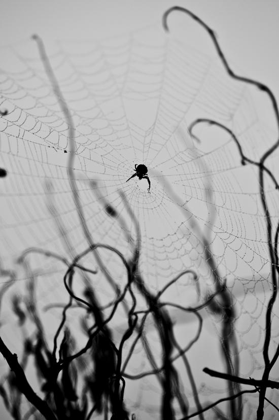 0264_spider_72