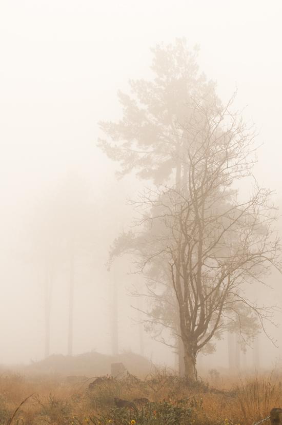 Trees_72
