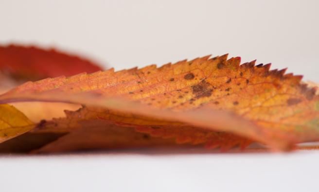 0548_leaf_72