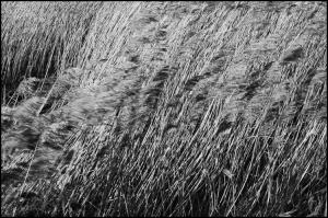 0592_Fire grasses_72