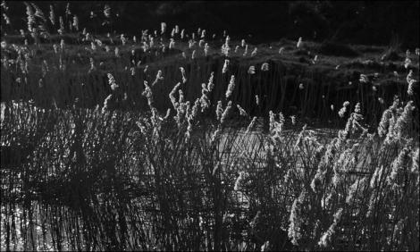 Dancing Grasses (2)