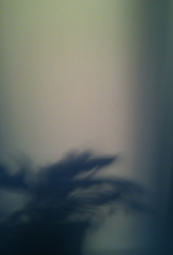 1011_plant shadow