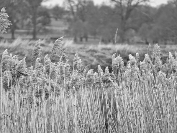 0319_Grasses_72
