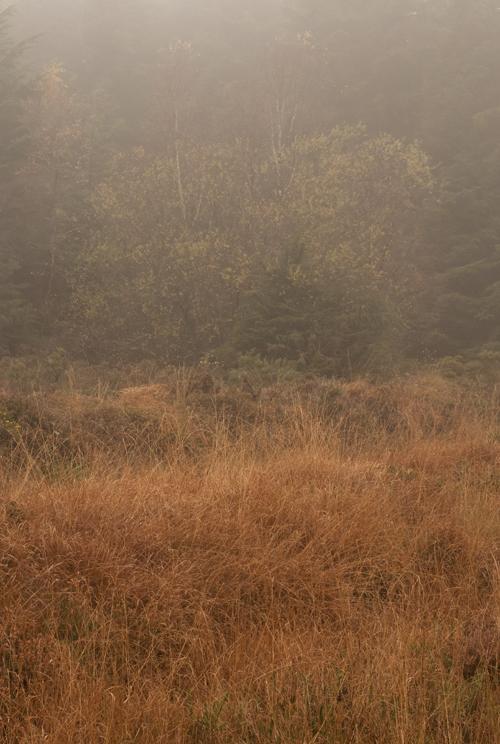 0884_Autumn1_72
