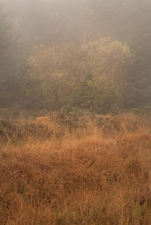0884_Autumn1c_72