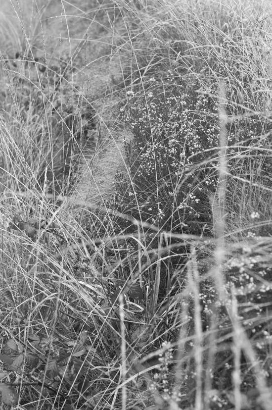 0890_grass tangle_72