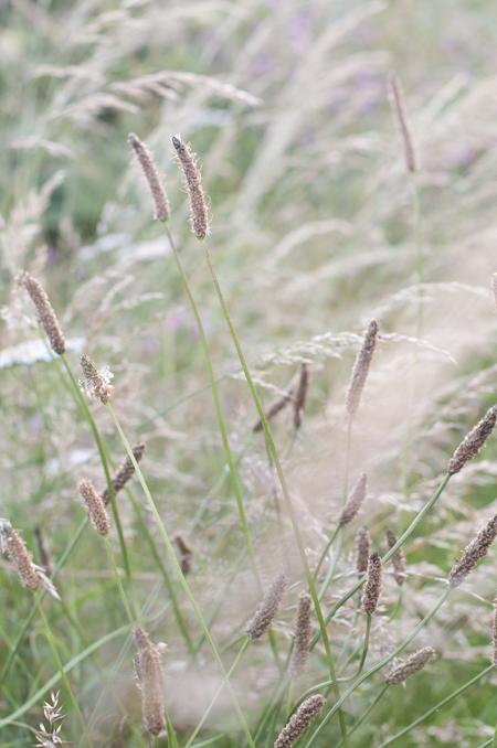1481_grass dance_72