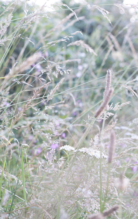 DSC_1480_grass dance 3_72