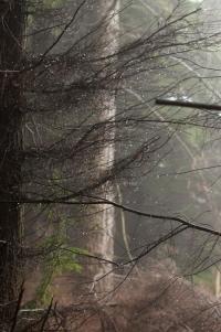Storybook - -Trees