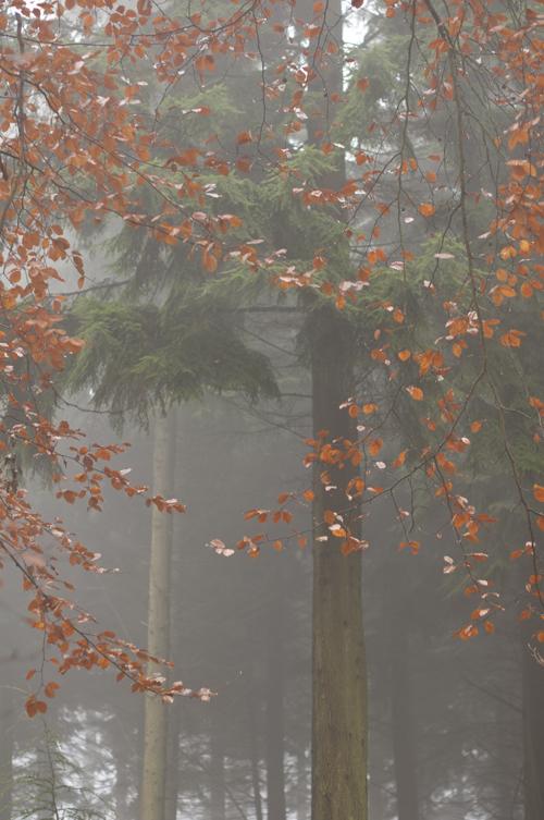 0781_Autumn song_72
